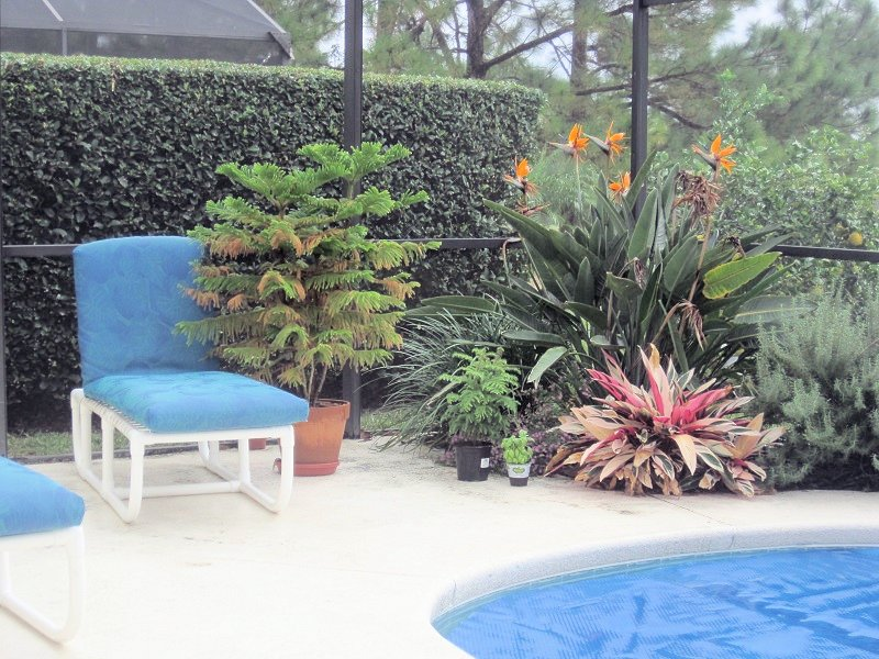 Florida Breeze pool and garden