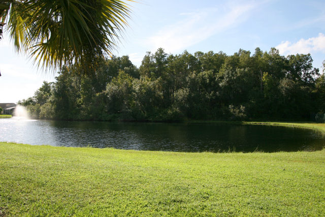 lake view which is visited by plenty of Florida  wildlife